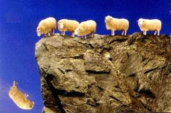 Sheep_off_cliff1